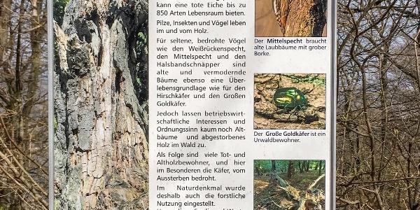 Informationstafel zum Altholz