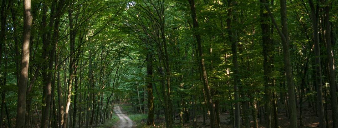 Halyagos körüli erdő