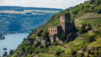 Burg Gutenfels inmitten der Weinberge