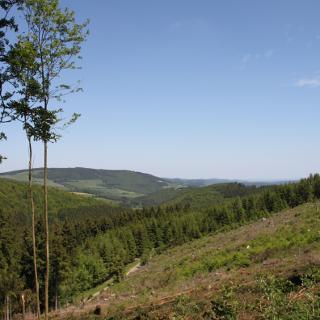 Aussicht Richtung Titmaringhausen
