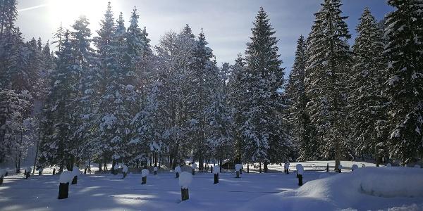 Verschneites Winterwunderland im Anger