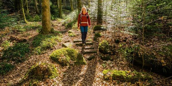 Wandern Deluxe auf urigen Waldpfaden