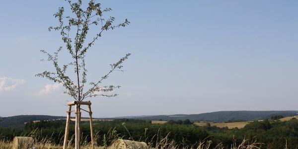 Felderlandschaft bei Longkamp