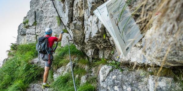 Am Einstige zum Pidinger Klettersteig