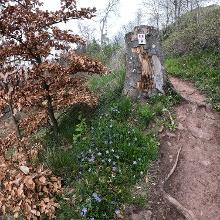 Trail im April
