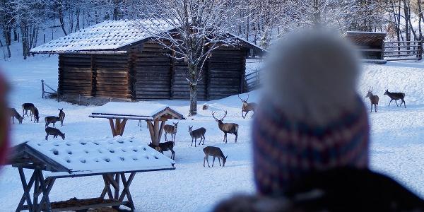 Wildtiere im Nationalpark Berchtesgaden beobachten