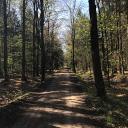 Jersbeker Forst