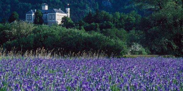 Irisblüte am Ennsradweg beim Schloss Trautenfels