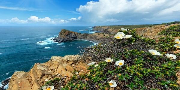 Wildblumen an der wilden Algarve