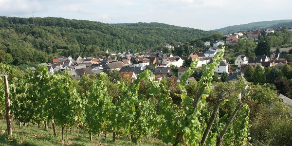 Weinberg in Tiefenbach