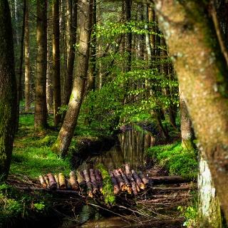 Im Otterwald