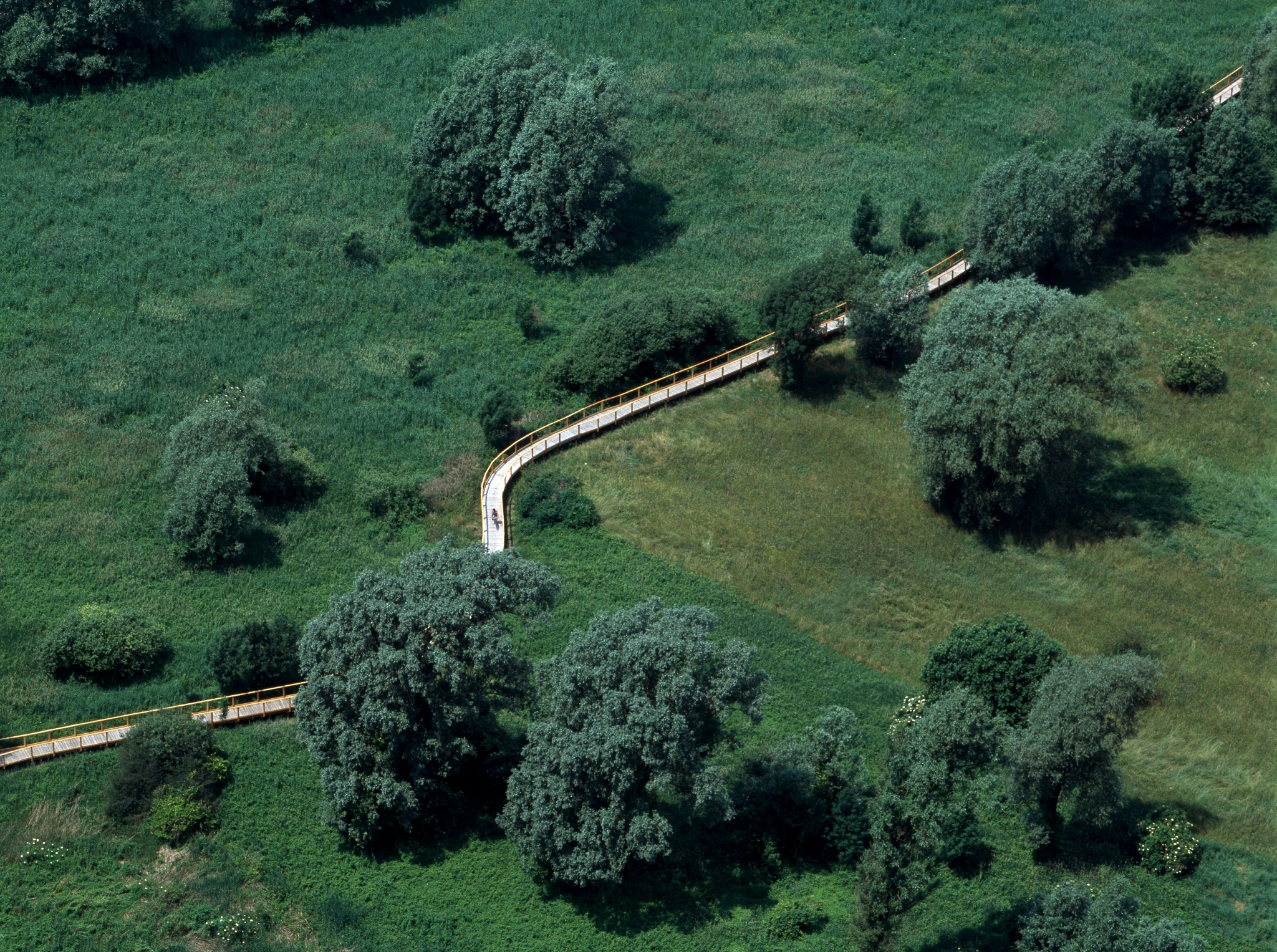 risalente alla valle del Rio Grande