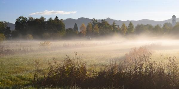 Nebelschwaden in den Bodenmösern