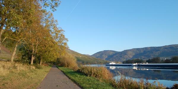 Mosel-Radweg bei Lieser