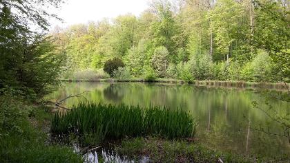 Die drei Teiche im Wald