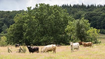Tiere in der Oberen Treenelandschaft