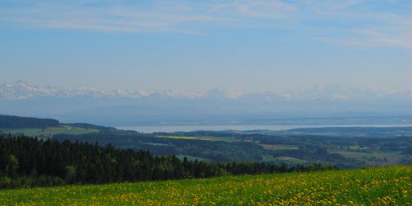 Aussicht vom Höchsten auf den Bodensee und die Alpen