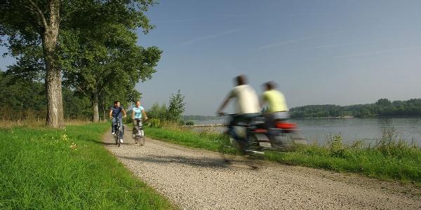 Der Rheinradweg zwischen Worms und Bingen