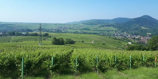 Pälzer Keschdeweg Etappe 3 oberhalb von Albersweiler St. Johann