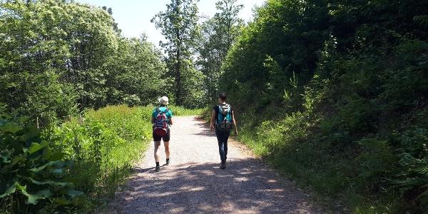 Pälzer Keschdeweg Etappe 3 Wandern auf dem Keschdeweg