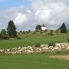 Schafherde auf dem Alten Berg