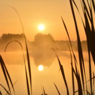 Naturschutzgebiet Großer Weidenteich