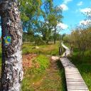 Mit dem Eifelsteig geht es auf Holzstegen durch das Struffeltvenn