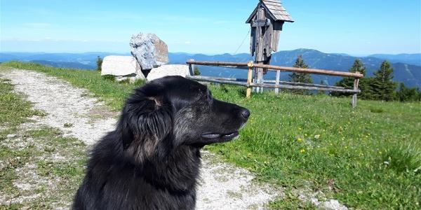 Unser Hüttehund Nala hat ein ausgeprägtes Revierverhalten. Liebe Hundebesitzer, respektiert das bitte und lasst euren Hund zuhause.
