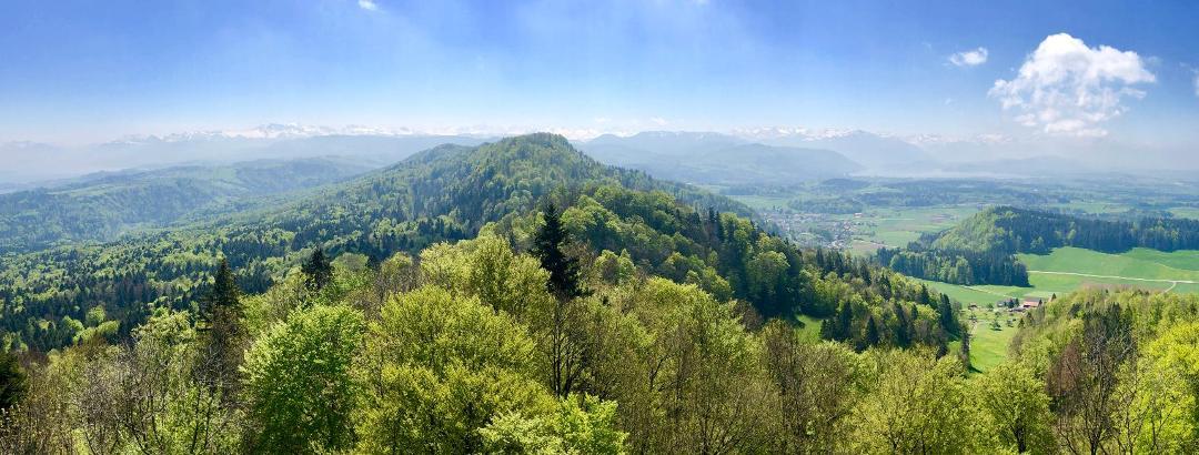 Vom Türlersee über die Albispasshöhe