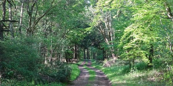 Durch den Wald geht es nun in Richtung Waldgut Schirmau.