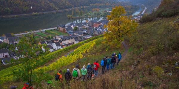 Traumpfad im mystischen Herbstzauber - Bloggerwandern Mosel Rheinland-Pfalz 2018