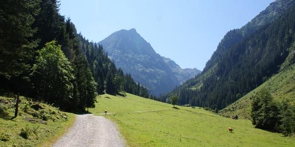 Der Weg ins Steinriesental im Bereich der Unteren Steinwendalm