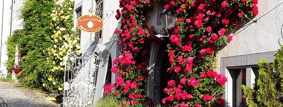 Rosen im Schloss Salem