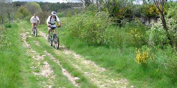 Circuit VTT n°16 : La Forêt de Baupillac