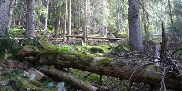 Idyllische Wälder...