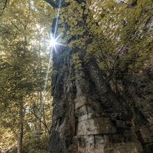 Baum am Felsen