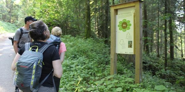 Los geht's - Auf dem Schutzwaldpfad erfährt man viel Spannendes zur Wichtigkeit der Schutzwälder