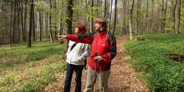 Großer Freeden: Schöne Wanderstrecke zu jeder Jahreszeit