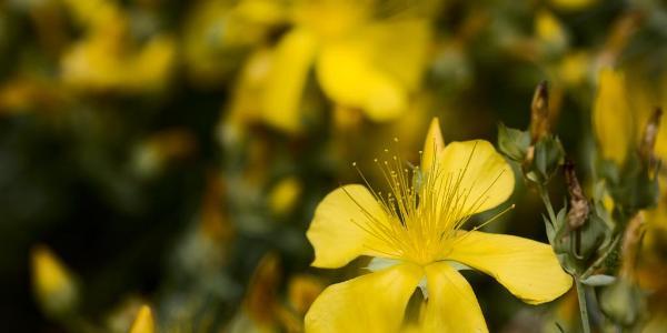 Blütenpracht im Boselgarten