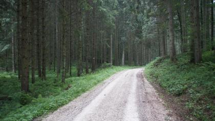 Teilstrecke durch schattigen Wald