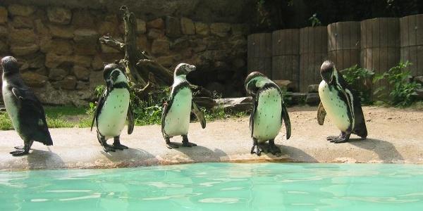 Pinguingruppe