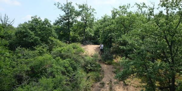Kilátás a Pandúr-kőről