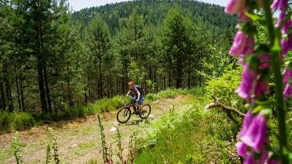 Unterwegs mit dem E-Mountainbike auf schönen Waldwegen mit Aussicht