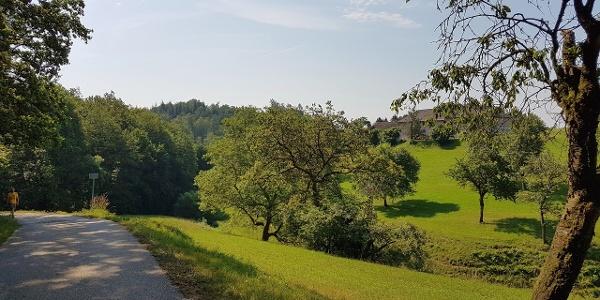 Mühlviertler Hügellandschaft, gleich ist der Steyregger Wald erreicht