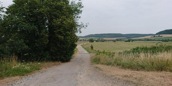 Sentier vers Maxey sur Meuse