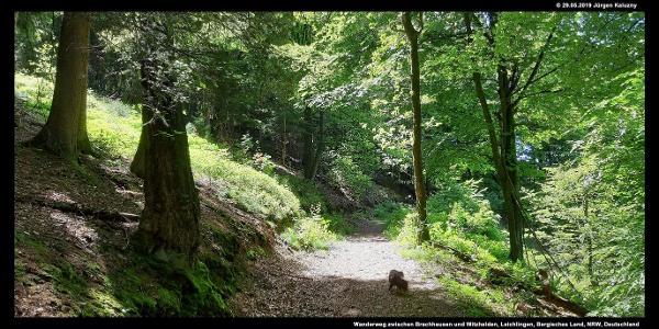 Wanderweg zwischen Brachhausen und Witzhelden