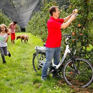 Radfahren entlang der Apfelgärten