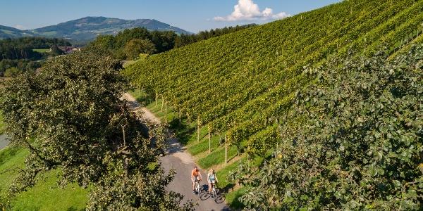 Radfahren entlang der Weingärten