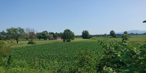 Ried Alter Rhein