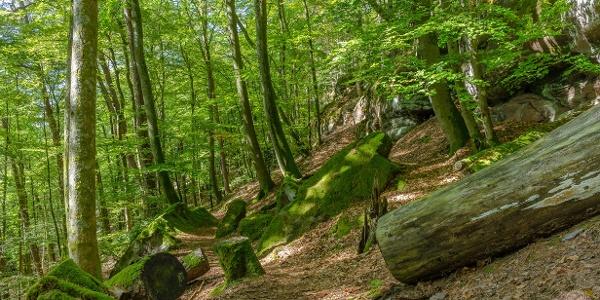 Abwechslungsreiche Waldlandschaft